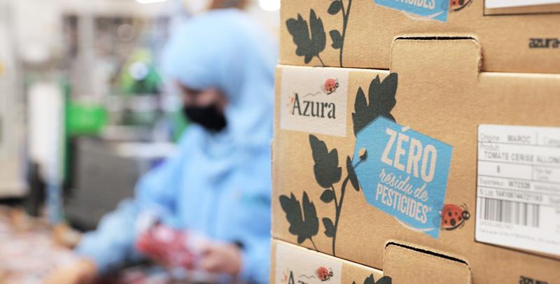 Tomatoes Azura zero residue pesticides
