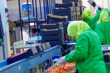 Packaging Line Azura Cherry Tomato