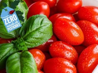 Lange Kirschtomate mit Zero Pesticide Residue